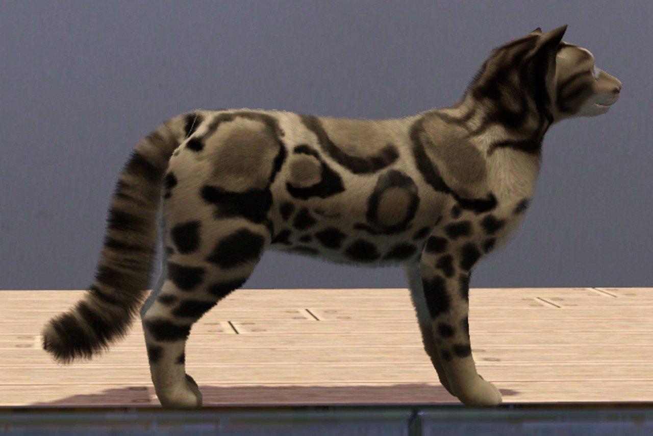 Питомец дымчатый леопард от Lea.Sikora для Симс 3